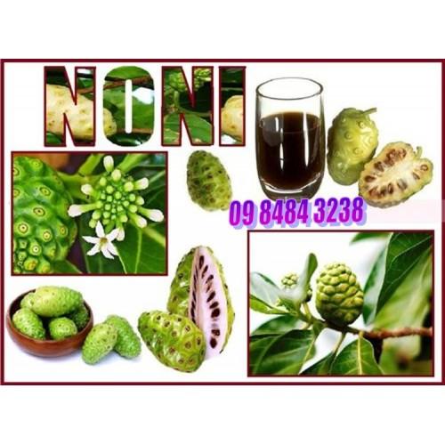 Tahitian Noni Noni Leaf Serum - Dưỡng chất lá NONI
